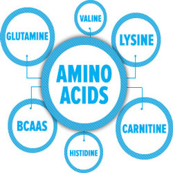 essentiele aminozuren voeding